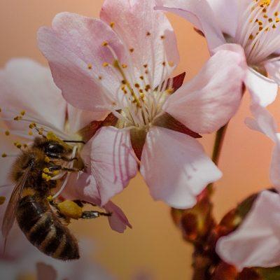 Лети, бджілко, до садочку