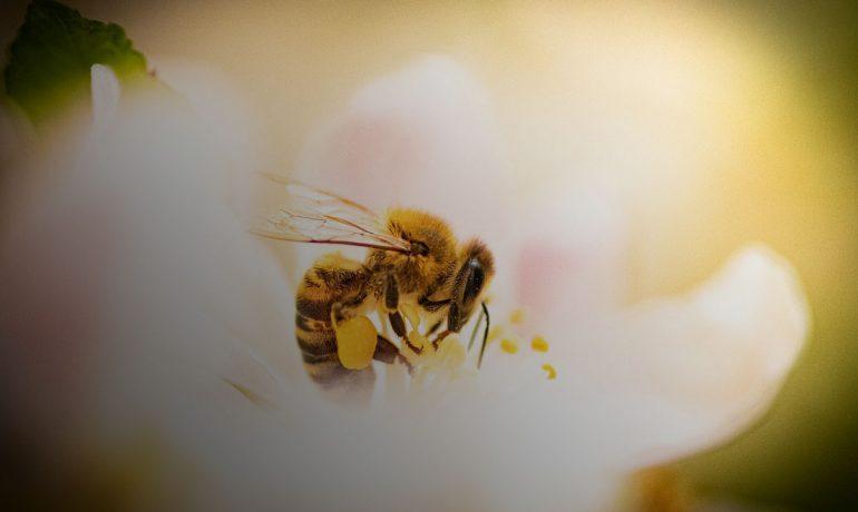 пчелы клонирование