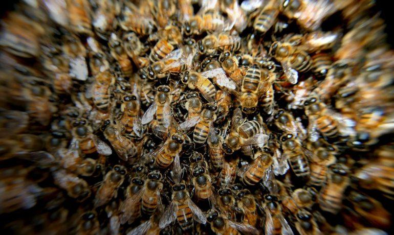 смерть від укусу бджіл