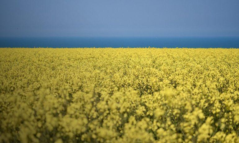 Урожай украина 2021