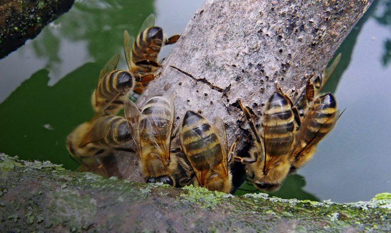 жара пчелы