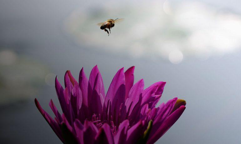 нформація бджолярам