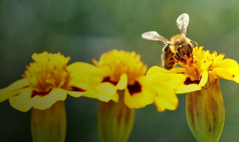 пчелы не жалят