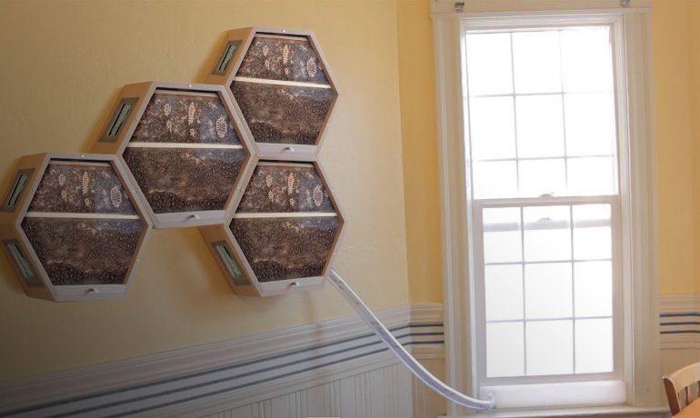 пчелы в квартире