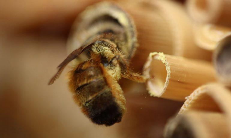 умные пчелы