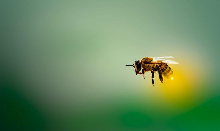 Пробиотик для пчел