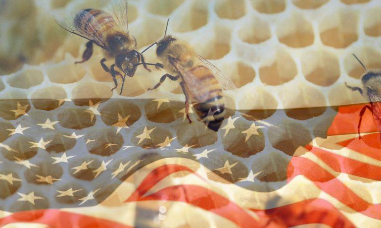 Апимондия США мед