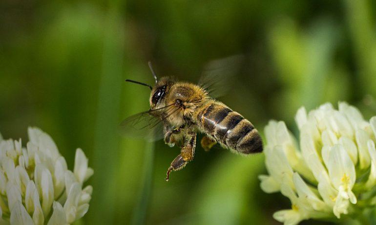 бджоли для героїв