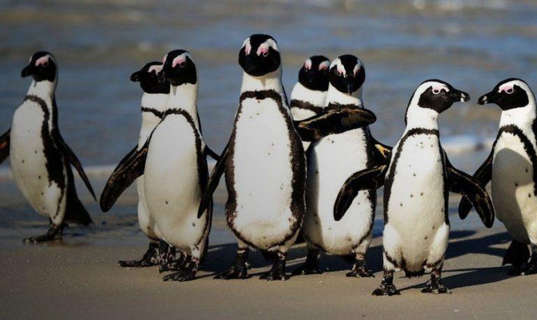 укиси бджіл пінгвіни