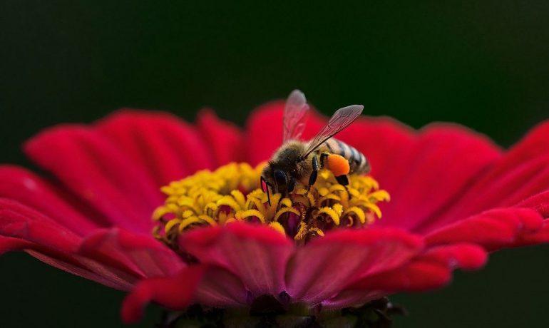 о пчелах