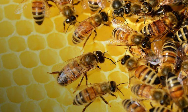 пподдержка пчеловодства