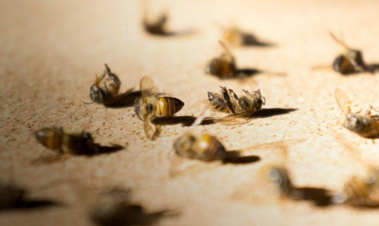 суд гибель пчел